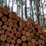 木材のトレーサビリティにこだわる!